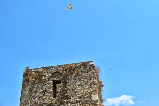 Α butterfly over the tower